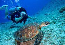 Nurkowanie, czyli wniknięcie do świata podwodnego